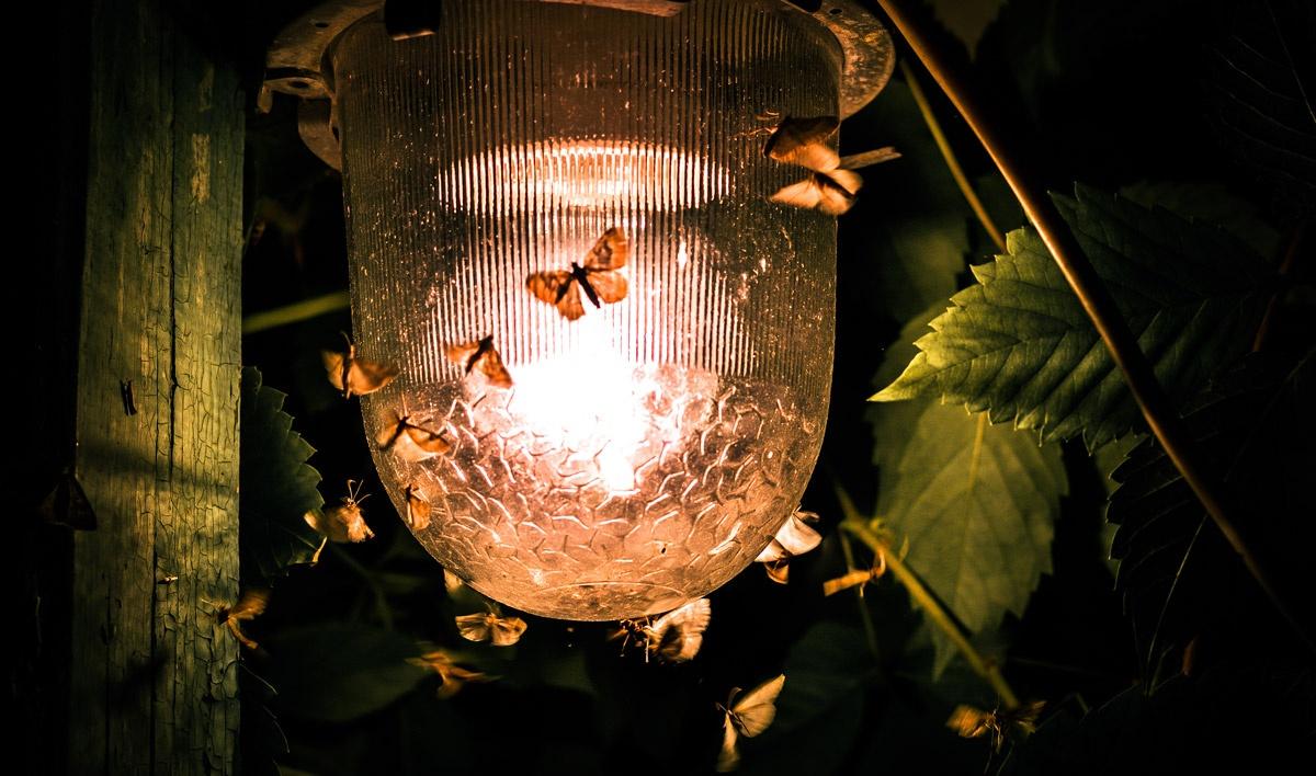 moths around a lamp