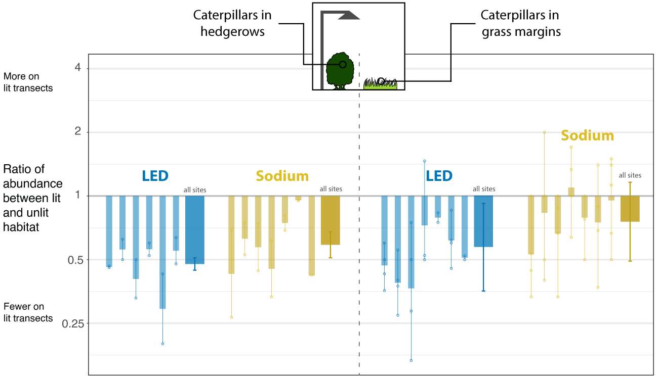 Figure showing differences in caterpillar abundance in lit and unlit areas